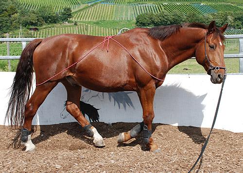 Anabolika Pferd